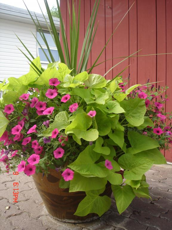 Container gardening blog rutgers landscape nursery for Garden planter ideas