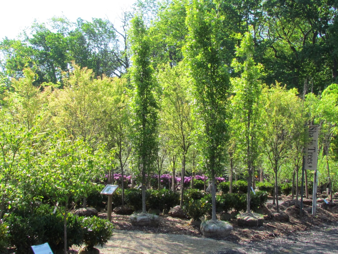 Rare And Unusual Plants Blog Rutgers Landscape Nursery