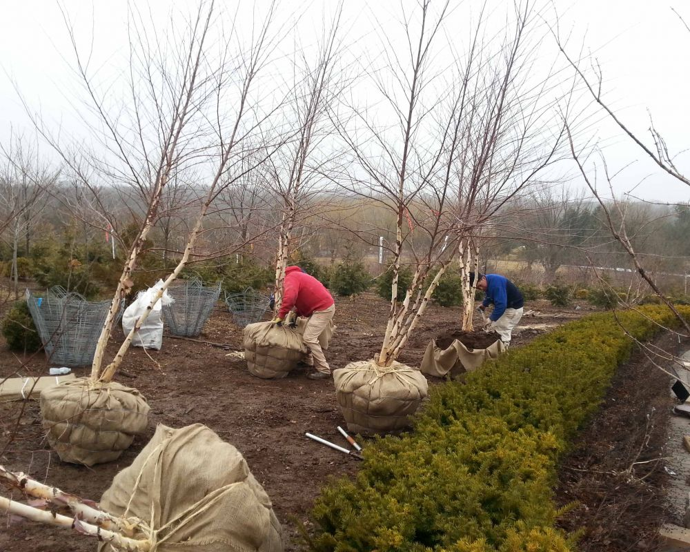 Blog » Rutgers Landscape & Nursery | Just another WordPress site ...