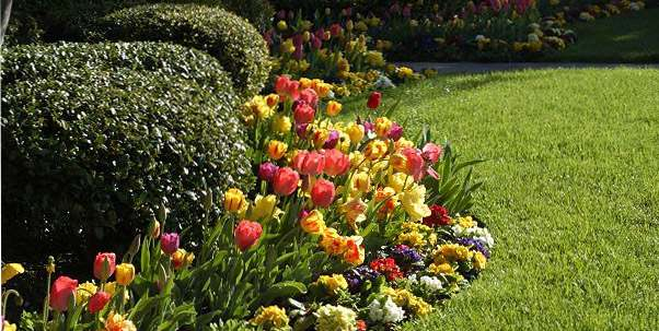 Now is the time to plant spring bulbs blog rutgers - Spring bulb garden design ...