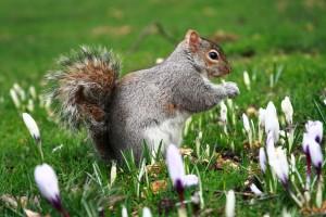 squirrel bulb