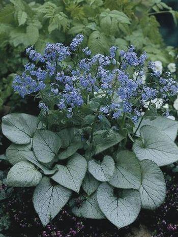Japanese Garden Design Plants