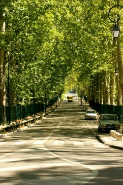 Trees for streets and avenues