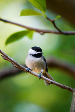 Plants that are attractive to birds